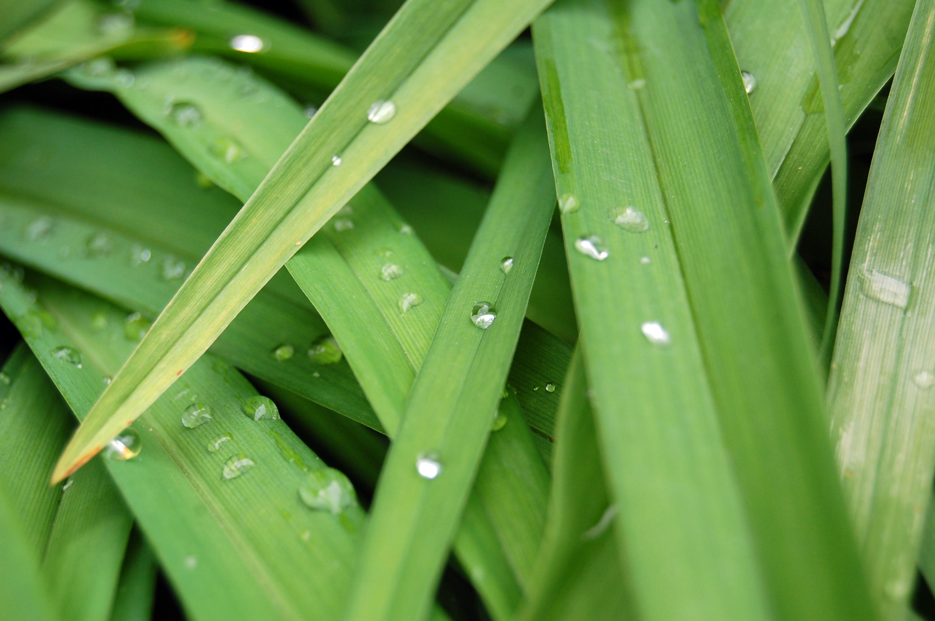 Gouttes de pluie sur des feuilles