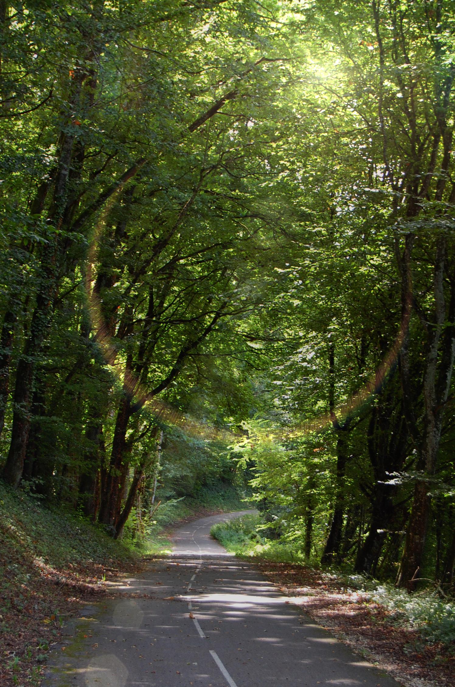 Piste cyclable ViaRhôna sous les arbres